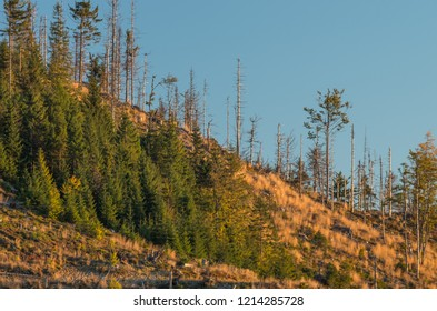 Windthrop in Beskidy mountains forest attacked by spruce bark beetle, Poland