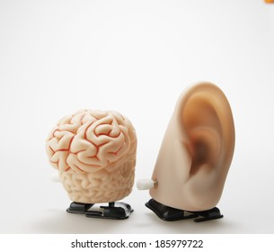 Wind-up Toys of Human Ear and Brains
