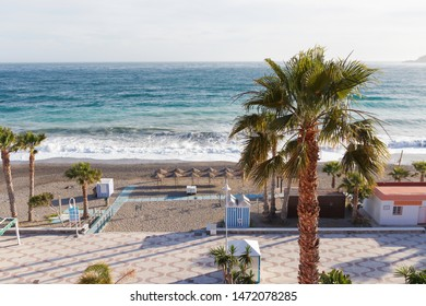Windy afternoon in a beach during spring with a palm in sight in Spain