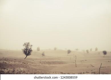 Windy before sandstorm in the Katpana Desert. Skardu, Gilgit Baltistan, Pakistan.