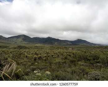 Windy and cloudy day in a paramo ecosystem. Endangered biome by climate change. Source of water because of frailejones and mosses plants. Stunning endemic vegetation biodiversity.