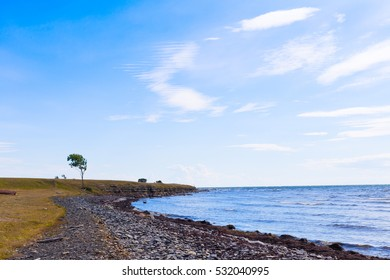 windy landscape with northern sea, rocky seaside and cliff, one single deciduous tree, southern sweden