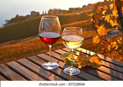 Wein auf Weinbergen in Lavaux, Schweiz