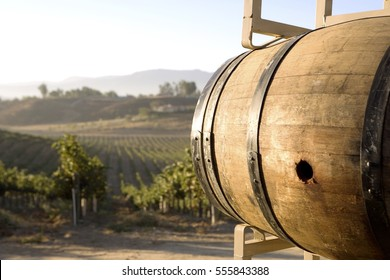 Wine barrel in vineyard
