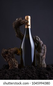 Wine Bottle With Vine to embrace the Bottle, From Hearth and Black Background. Old and Traditional Concept
