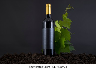 Wine Bottle with vine in a traditional environment in a black background