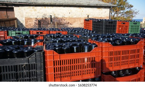 Wine bottles in crates. Ready to charge