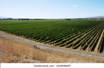 Wine country landscape summer panorama vineyard rows Blenheim New Zealand