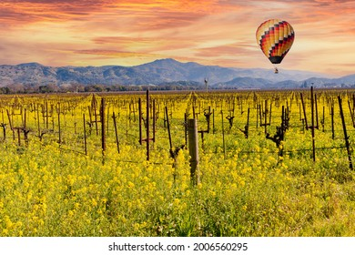 Wine Country Napa Valley Vineyards, Spring Mustard Blooming in the Fields, Hot Air Balloon Flying and Beautiful Sunrise.
