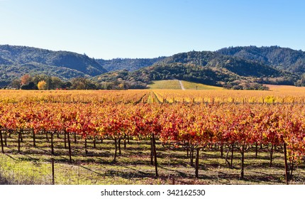 Wine Country, Napa Valley Vineyards in Autumn