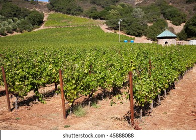 Wine Country, Nappa Valley in California, USA