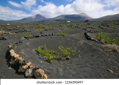 Wine growing on Lanzarote Island, Canary Islands, Spain