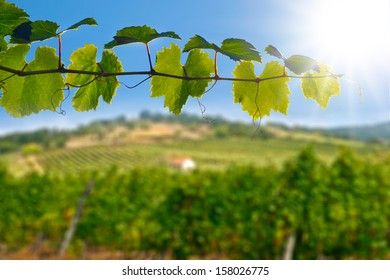 Wine Leafs Vineyard House Plant Detail Landscape Tokaj Hungary