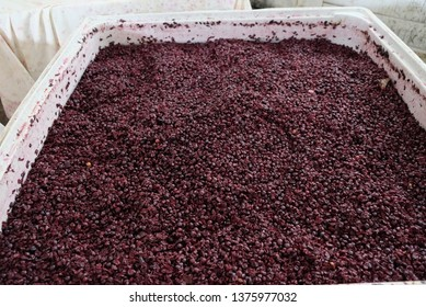 wine making process - fermented grape before pressing