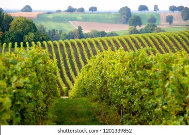 Wine Region within the Rhineland-Palatinate state in Germany with many wineyards. In the background hill landscape scenery with many vines rows