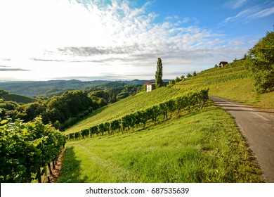 Wine route through steep vineyard next to a winery in the tuscany wine growing area, Italy Europe