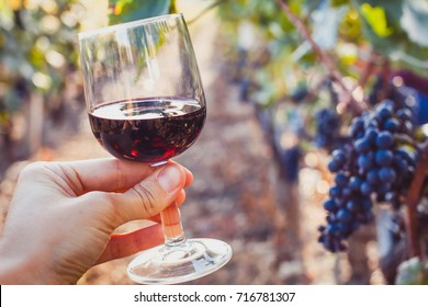 wine tasting, degustation, hand holding a glass in wineyard