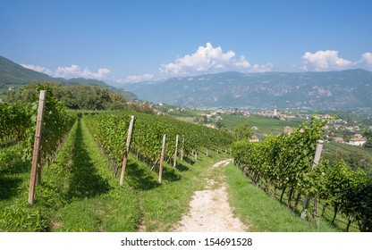 Wine Village of Eppan near Merano,South Tirol,Trentino,Italy