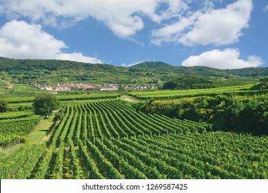 Wine Village of Oberbergen in Kaiserstuhl Wine region,Black Forest,Germany