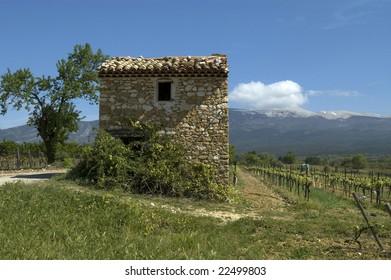 wine yard at mont ventoux, provence, france