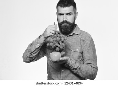 Winegrower with strict face holds grapes and red fruit. Viticulture and gardening concept. Man with beard holds bunch of green grapes and apple isolated on white background. Farmer shows his harvest