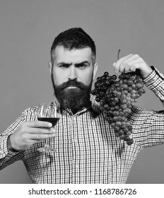 Winegrower with strict face presents product made of grapes. Man with beard holds bunch of grapes and glass of wine isolated on green background. Viticulture and autumn concept. Vintner shows harvest