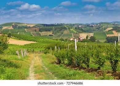 Wine-growing Langhe region, Italy, Piedmont. Beautiful views of the Italian countryside.Rural landscape.