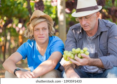 Winemakers father and son in vineyard. Family winery business. Winegrower man in straw hat examining grapes during vintage. Two generations of vintners together. Harvest time in winery industry