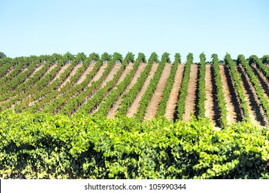 Wineries in Napa Valley.
