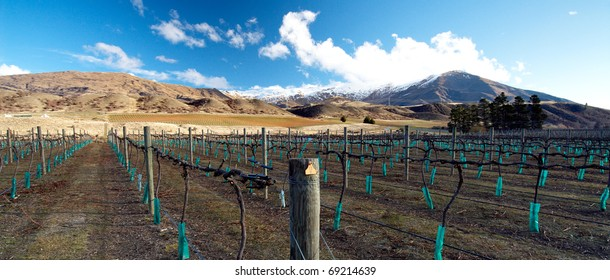 A winery and bare vines at a Central Otago winery on New Zealand's South Island. This area is reknowned for it's splendid Pinot Noir varieties