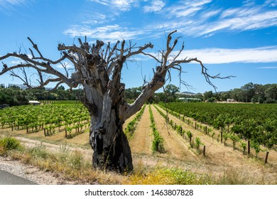 Winery in Barossa Valley in South Australia, with a dry tree in the foreground.