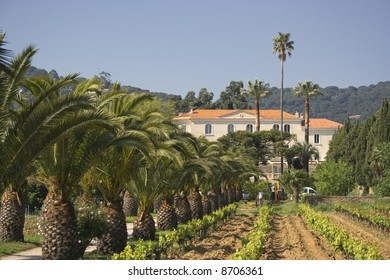 winery behind a vineyard and palm trees - french riviera