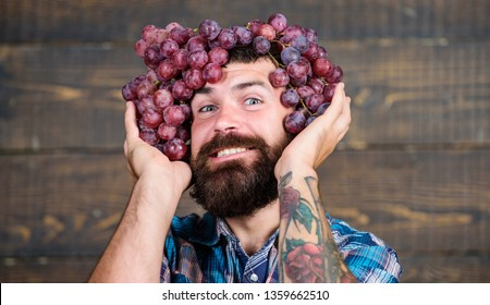 Winery cheerful worker. Farmer with grapes. Winery concept. Man with beard hold bunch of grapes on head wooden background. Vintner proud of grapes harvest. Handsome bearded hipster owner of winery.
