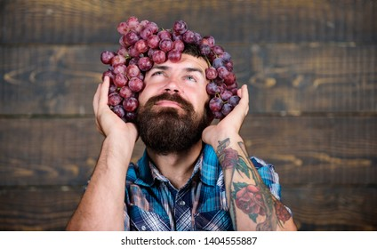 Winery concept. Man with beard hold bunch of grapes on head wooden background. Vintner proud of grapes harvest. Handsome bearded hipster owner of winery. Winery cheerful worker. Farmer with grapes.
