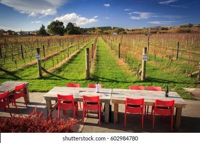 Winery green field. Location: New Zealand Aotearoa