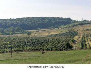 Winery landscape in the countryside