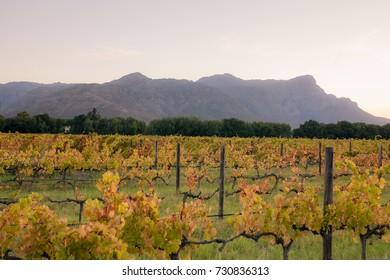 Winery landscape in Stellenbosch