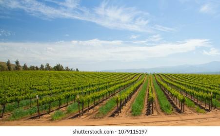 winery under blue sky