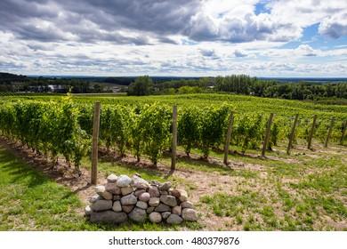 Winery Vineyard Grapes