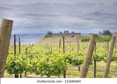 Winery Vineyard in Maryhill Stonehenge Washington State Along Columbia River Gorge