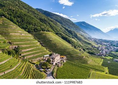 Winery and vineyards, mountain valley. Valtellina. Italian Alps