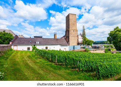 Winery and vineyards in Rudesheim am Rhein town in the Rhine Valley, Germany