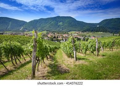Winery Zlati gric, Slovenske Konjice, Slovenia