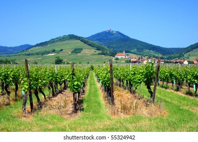 Wineyard in France