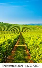 wineyard near Villany, Hungary