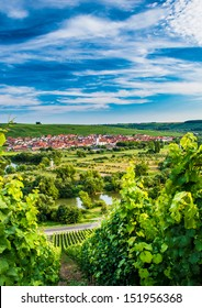 Wineyard near Volkach