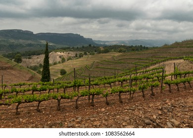 wineyard on a valley