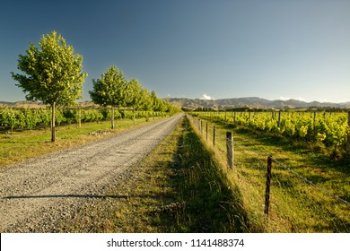 Wineyard, winery New Zealand, typical Marlborough landscape with wineyards and roads, hills and mountains.