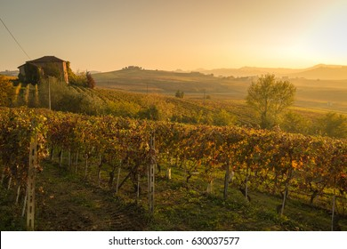 Wineyards in Barolo