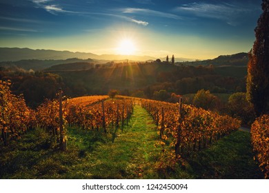 Wineyards fields, sunset view from Spicnik near Maribor.